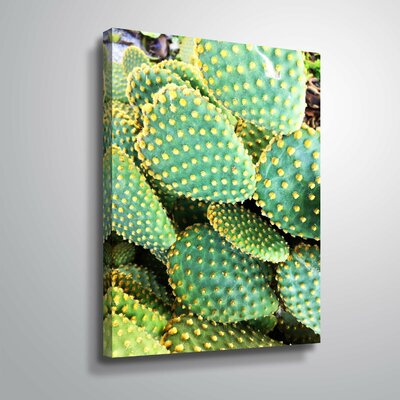 'Sunny Cactus' Photographic Print Format: Wrapped Canvas, Size: 10