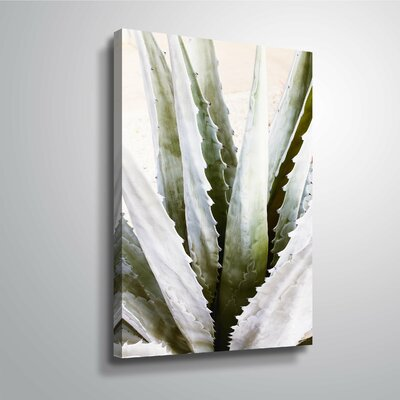 'Succulent Symphony 3' Photographic Print Format: Wrapped Canvas, Size: 12