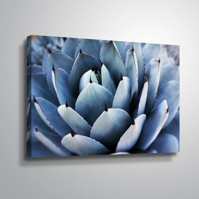 'Summer Succulent Symphony 13' Photographic Print Format: Wrapped Canvas, Size: 12