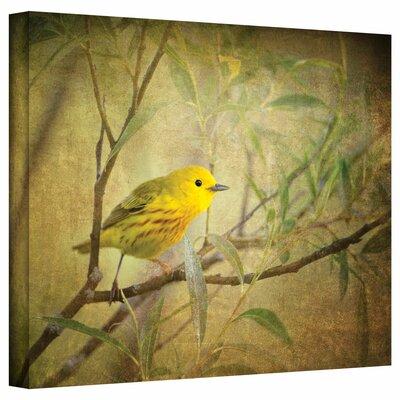'Bird on Branch' Graphic Art on Canvas Size: 14