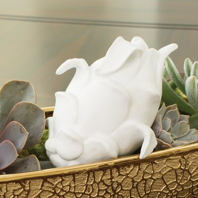 Dragon Fruit in Porcelain