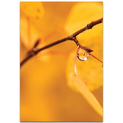 'Golden Drop' Photographic Print Format: Metal