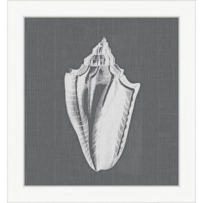 White Shell I Framed Graphic Art
