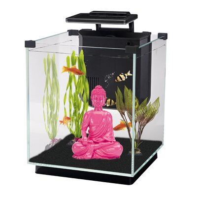 Simplicity 5.5 Gallon Desktop Aquarium Tank