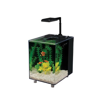 Prism 2 Gallon Desktop Aquarium Tank Color: Black, Size: 10.5 H x 10 W x 8.15 D