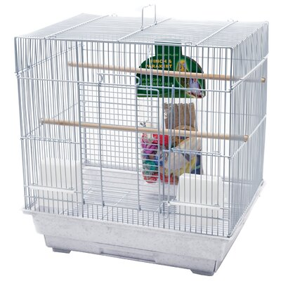 Bird Starter Kit (Set of 2)