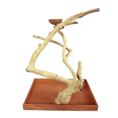 Hazel Java Wood Table Top Play Stand Size: Medium (22 H)