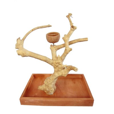 Hazel Java Wood Table Top Play Stand Size: Small (15 H)