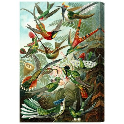 The Art Cabinet Haeckel - Bird Study Painting Print on Wrapped Canvas