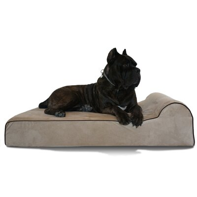 Bully Dog Bed Size: 60 L x 48 W