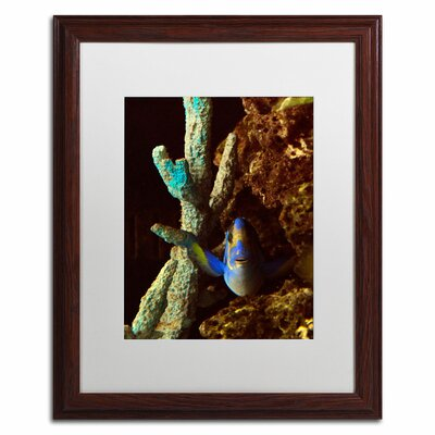 'Fish in the Rocks' by Kurt Shaffer Framed Photographic Print Size: 20