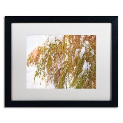 "Winter on Redwood"" by Kurt Shaffer Framed Photographic Print KS01055-B1620MF"