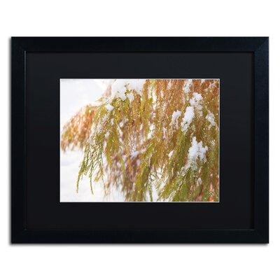 "Winter on Redwood"" by Kurt Shaffer Framed Photographic Print KS01055-B1620BMF"