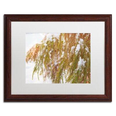 "Winter on Redwood"" by Kurt Shaffer Framed Photographic Print KS01055-W1620MF"