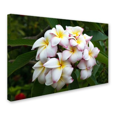 """Plumeria"""" by Pierre Leclerc Photographic Print on Wrapped Canvas PL0236-C1219GG"""