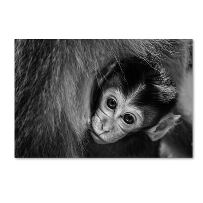 "'A Mother's Love' Photographic Print on Wrapped Canvas Size: 22"" H x 32"" W 1X00336-C2232GG"