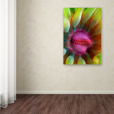 """'Cup Coral Portrait' Graphic Art Print on Wrapped Canvas Size: 19"""" H x 12"""" W 1X03979-C1219GG"""
