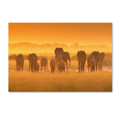 "'Golden Light' Photographic Print on Wrapped Canvas Size: 12"" H x 19"" W 1X03792-C1219GG"