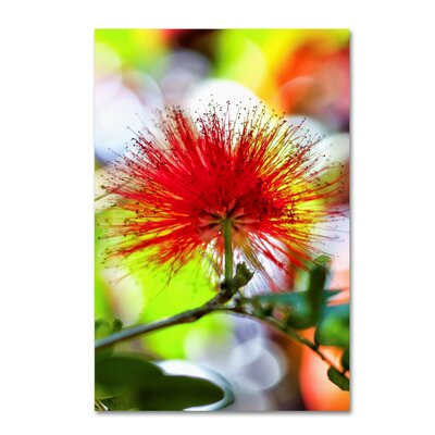 'Red Burst 3' Graphic Art Print on Wrapped Canvas ALI16937-C1219GG