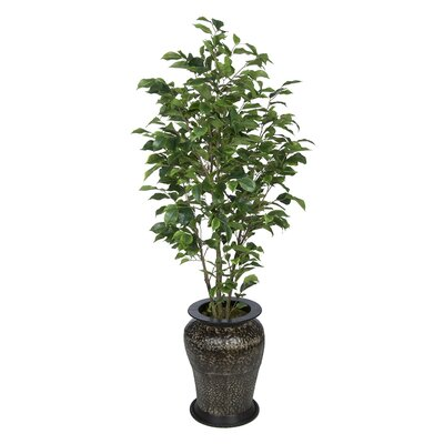 Ficus Tree in Decorative Vase Leaves Color: Green
