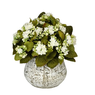 Artificial Kalanchoe Color: White HF0547-WH33