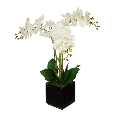 Artificial Triple Stem Orchid in Cube Vase Color: Black