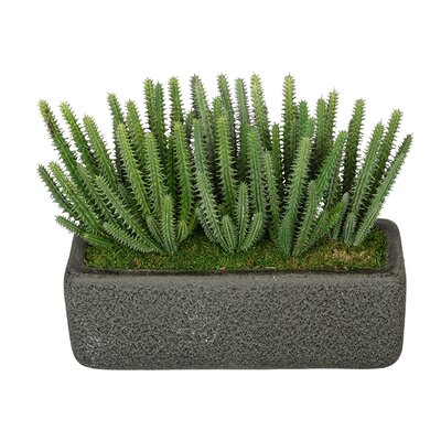 Artificial Organ Pipe Cactus Plant Decorative Vase Base Color: Black