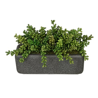 Artificial Sedum Plant in Planter Base Color: Black