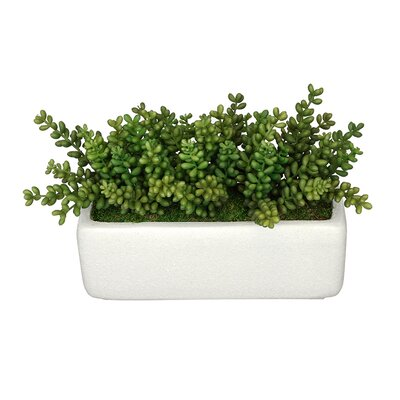 Artificial Sedum Plant in Planter Base Color: White
