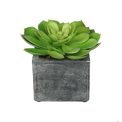Artificial Echeveria Plant in Ceramic Cube