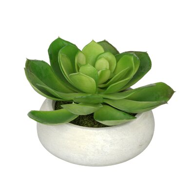 Artificial Echeveria Plant in Planter