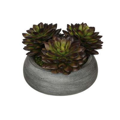 Artificial Pointed Echeveria Plant in Ceramic Bowl