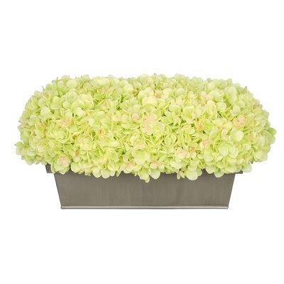 Hydrangea Centerpiece in Planter Flower Color: Green