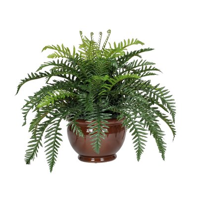 House of Silk Flowers Artificial Fern Desk Top Plant in Fishbowl Decorative Vase - Base Color: Brown