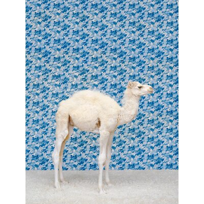 'Camel On Blue' Photographic Print on Wrapped Canvas Size: 14