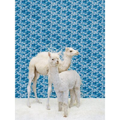 'Camel and Llama on Blue' Photographic Print on Canvas Size: 14