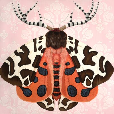 'Embellished Moth' Print on Wrapped Canvas Size: 10