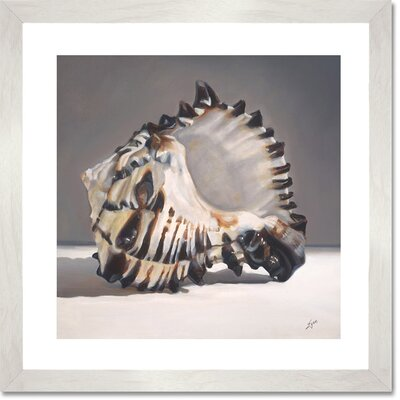 "'Tiger Shell' by Nancy Egan Graphic Art Print on Paper Format: Framed, Size: 20"" H x 20"" W x 0.75"" D CU2463"