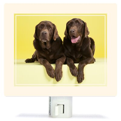 Chocolate Labs On Yellow by Catherine Ledner Canvas Night Light