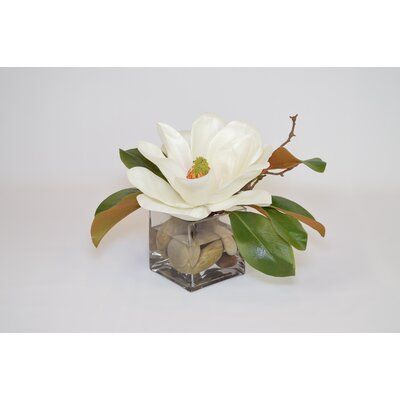 White Magnolia in Cube with Rocks