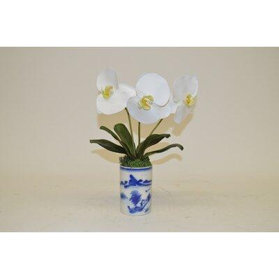 Phalaenopsis Orchids in Cylinder Vase
