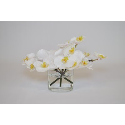 Orchids in Oval Glass Vase