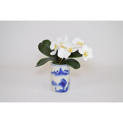 Orchids in Cylinder Vase