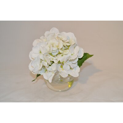 Hydrangea in a Bubble Color: White