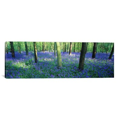 Panoramic Bluebells in a Forest, Charfield, Gloucestershire, England Photographic Print on Canvas Size: 16