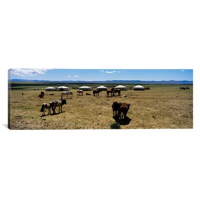 Panoramic Group of Horses and Yurts in a Field, Independent Mongolia Photographic Print on Canvas Size: 16