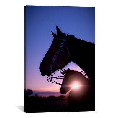 'Morning Glory' by Dan Ballard Photographic Print on Canvas Size: 40