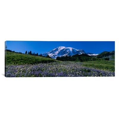 Panoramic Wildflowers on a Landscape, Mt Rainier National Park, Washington State Photographic Print on Canvas Size: 20