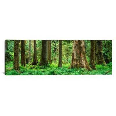 Panoramic Trees in a Rainforest, Hoh Rainforest, Olympic National Park, Washington State Photographic Print on Wrapped Canvas PIM1831-1PC3-36x12