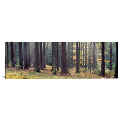 Panoramic Trees in the Forest, South Bohemia, Czech Republic Photographic Print on Canvas Size: 12